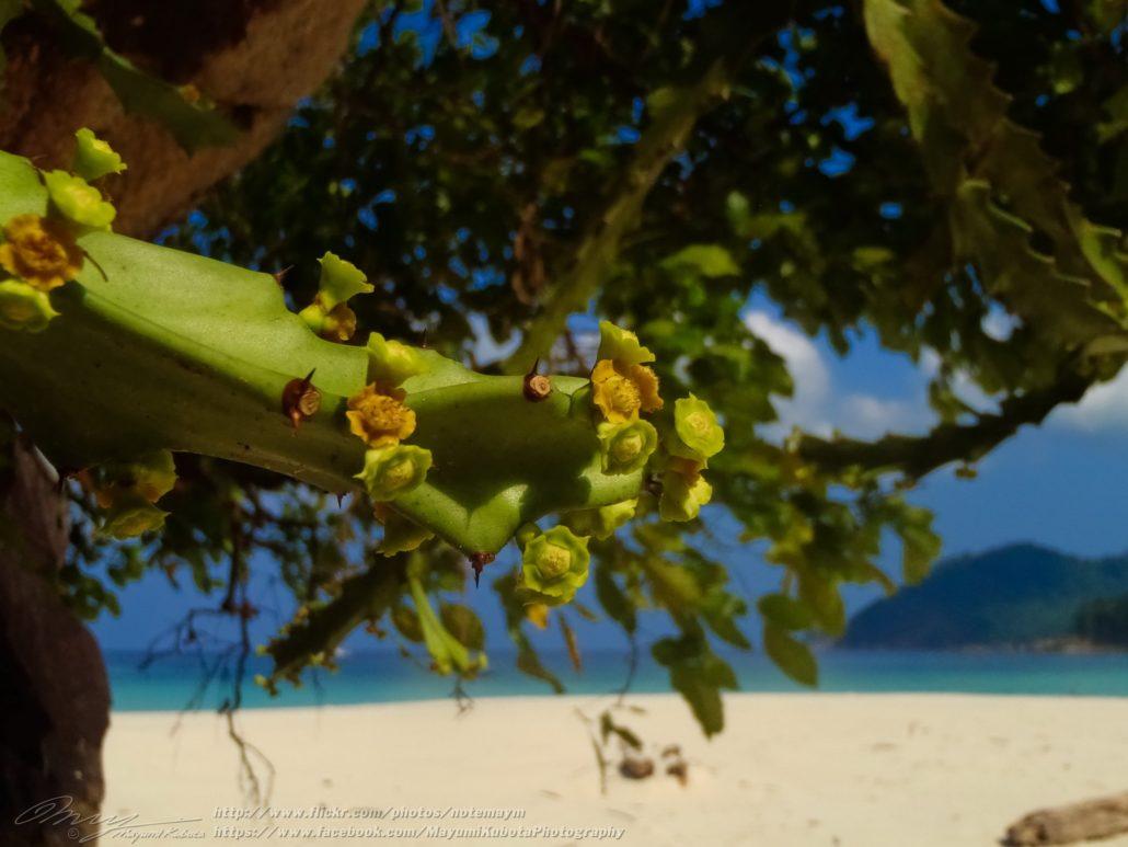 Mergui archipelago beach